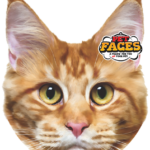kattenkussen pet faces rode kat