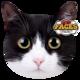 kattenkusseb pet faces extosiche wart wit kat